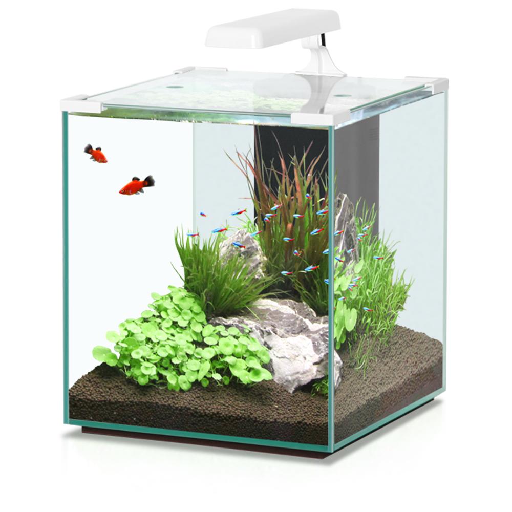 может нано аквариум фото они единственные потомки