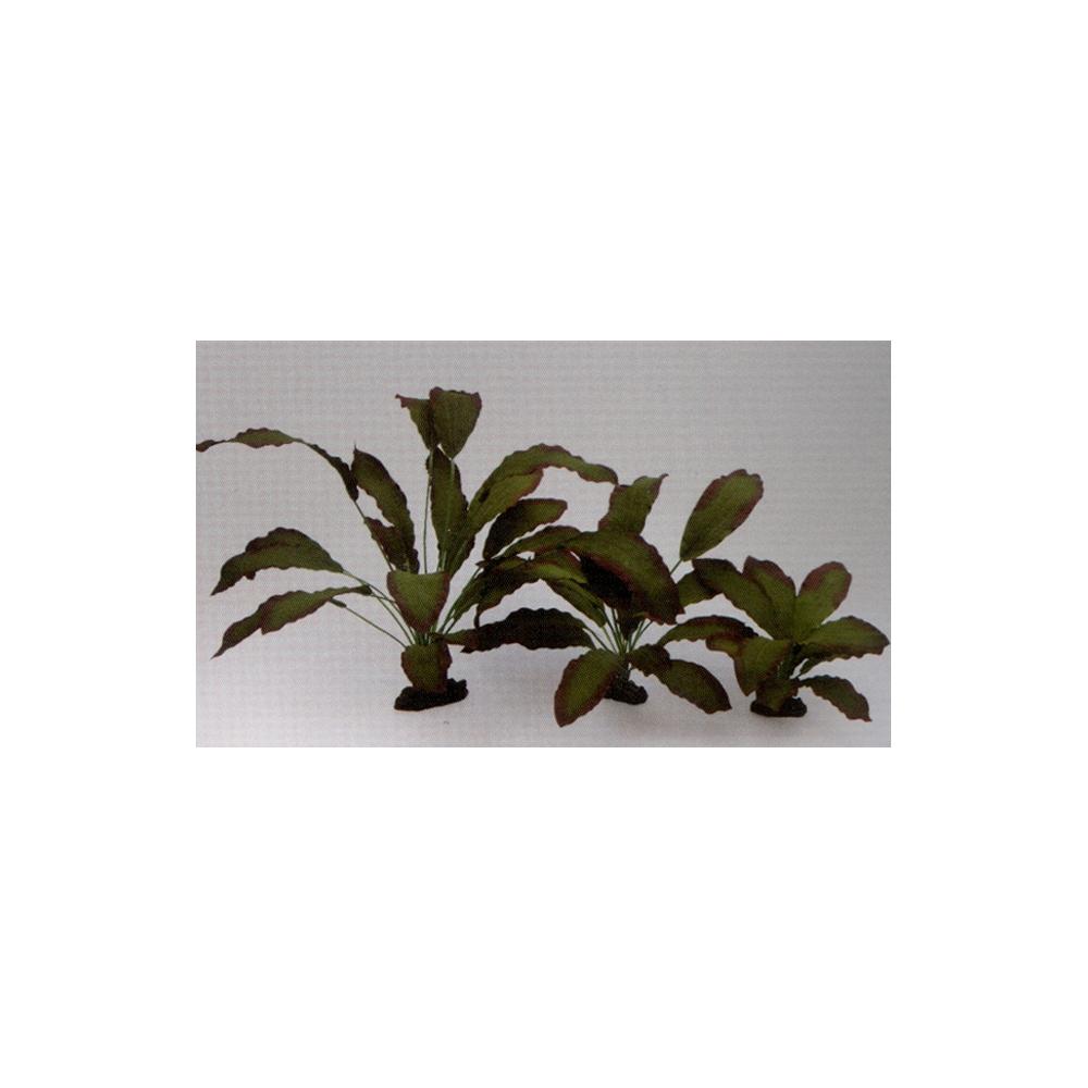 Растение шёлковое Эхинодорус Розеа 13см