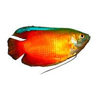Аквариумные рыбки, растения да животные