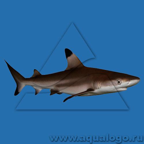 Акула рифовая черноперая купить 2 копейки 1869 года