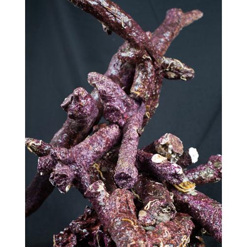 Камни живые Real Reef Branch Rock ветвистые (кг.)