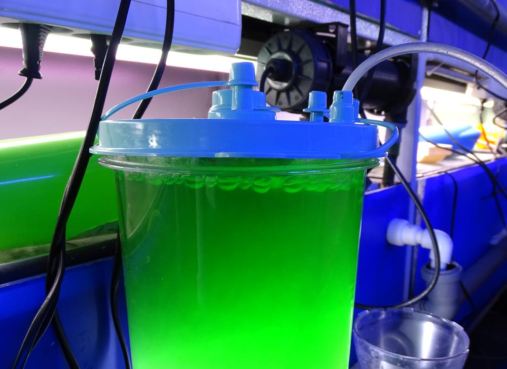 Фитопланктон кормовой Наннохлоропсис 1л