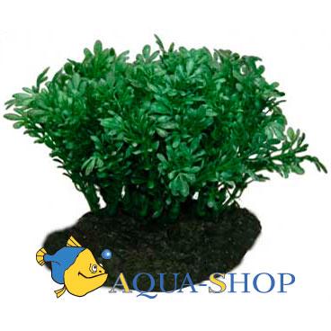 Растение для террариумов Lucky Reptile Глоссостигма