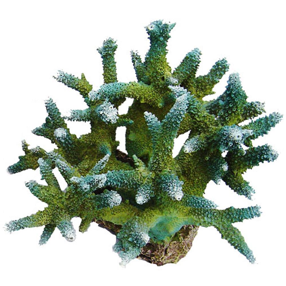Коралл пластиковый REPLICA LIVE CORAL L210 x W190 x H165мм зеленый