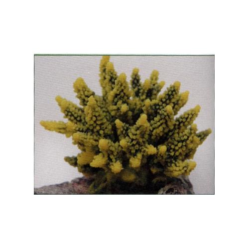 Коралл пластиковый желто-зеленый 11,5x10x9см (SH095GY)
