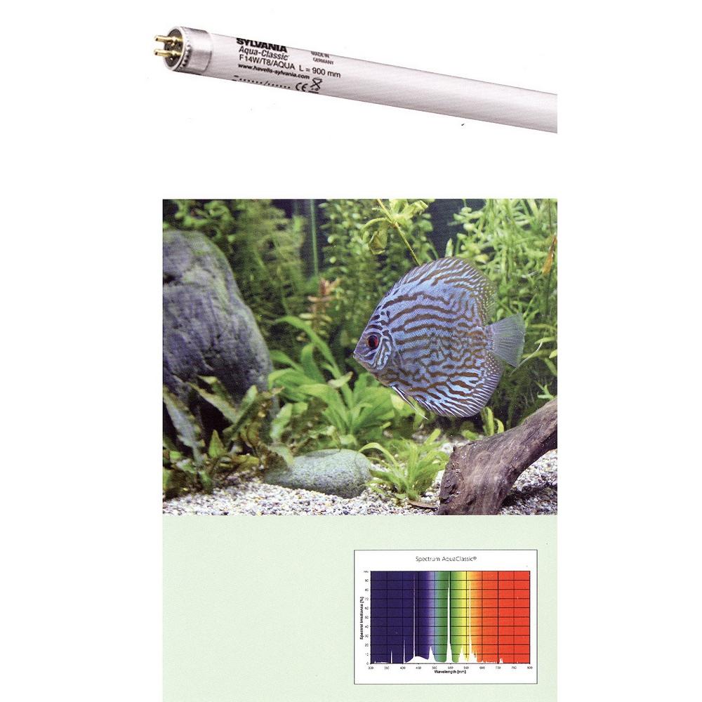 Лампа SYLVANIA T8 Aquaclassic 14Вт 36,1см, цоколь G13