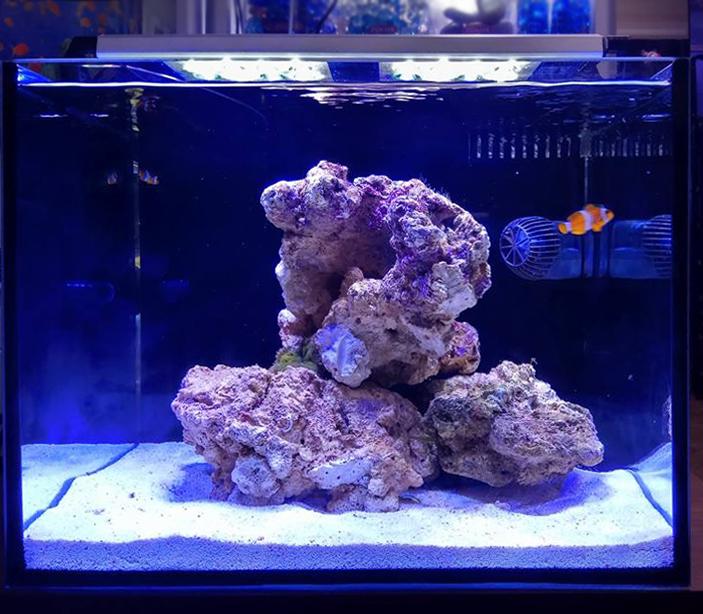Аквариум Ксения 40 л Нано риф