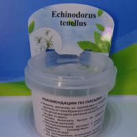Эхинодорус нежный меристемный - 290 руб за упаковку