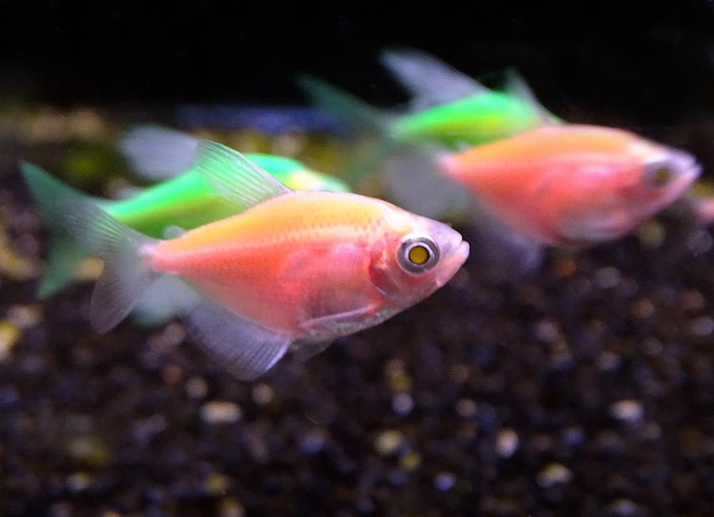 Полезные статьи по аквариумистике