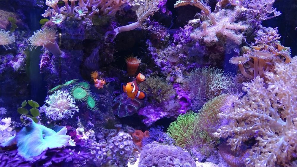 Морской аквариум с клоунами